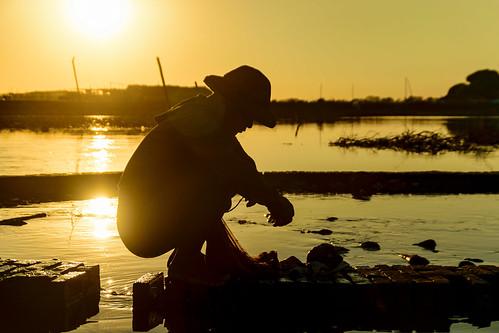 Fisherman at U Bein bridge, Mandalay