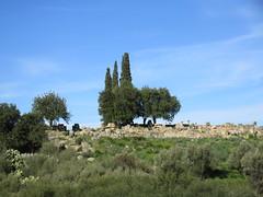 Trees amid the Roman ruins, Volubilis, Morocco (Paul McClure DC) Tags: morocco almaghrib fèsmeknèsregion volubilis jan2017 roman architecture historic scenery
