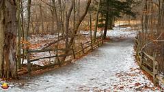 Knox Farm Bridge - Right (DTD_5570) (masinka) Tags: fence bridge winter fall colors ice snow frozen path trail hiking hike trees woods forest knoxfarm statepark park ny wny newyork 716 outdoors nature eastaurora buffalo etbtsy newyear 2017