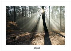 may the light be with you (Zino2009 (bob van den berg)) Tags: happynewyear 2017 light ray sunray fog cold sunny star bright forest holland winter december 30 walk zino2009