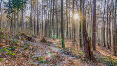 First sunset in 2017 - Erster Sonnenuntergang in 2017 (ralfkai41) Tags: lichter landscape landschaft sonne sonnenuntergang outdoor blätter wald natur bäume hdr lights sun forest wood lightbeams trees sunlight sunset lichtstrahlen nature sonnenlicht leafs