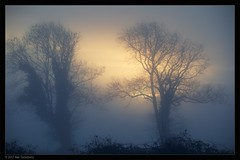 Dawn Fog (Neil Tackaberry) Tags: tree trees fog dawn morning winter jan january 2017 sunrise silhouette bramble brambles sky atmosphere atmospheric county co kerry countykerry cokerry irish ireland countryside rural landscape northkerry