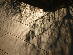 Reflektionen (Jörg Paul Kaspari) Tags: terrasse reflektionen schatten shadows rinn rinnplatte rinnplatten terrassenplatten gehölze