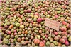 Pommes Des Pommiers (Christophe Hamieau) Tags: bretagne continentsetpays europe fr fra france loireatlantique apples cider cidre cidrerie fruits gastronomie gastronomy pommes