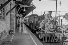 Il Treno (Serlunar (tks for 5.2 million views)) Tags: trem antigo serlunar museu do imigrante maria fumaca da imigracao sao paulo train old