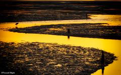 Caminhos para o Pôr do Sol (Fernando Delgado) Tags: pôrdosol fimdodia ria formosa parquenaturaldariaformosa sunset paisagem paisagemmarinha landscape marinelandscape birds waders