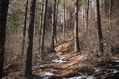 Vollèges (bulbocode909) Tags: valais suisse valdentremont forêts arbres nature montagnes hiver neige troncs sentiers vollèges