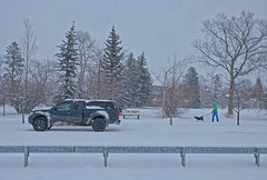Snow Day! (Sherlock77 (James)) Tags: calgary snow winter crescenthill guardrail truck pickup people dog