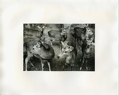 (?) Tags: darkroom print ilford warmtone fiber japan kyoto nara trix