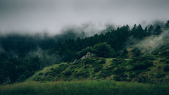 Fog on Forested Hillside (Image Catalog) Tags: trees green fog forest landscape haze outdoor hill mysterious vegetation hillside enigmatic publicdomain