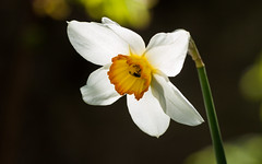 Fly in Flower (axelkr) Tags: flowers wallpaper background widescreen 1920x1200 1610 1440x900 1680x1050 1024x640 1280x800 2560x1600 3200x2000 2048x1280 3600x2250