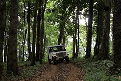The jeep through woods at Dare Nature Wayanad