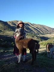 Little girl with little alpaca
