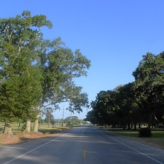 The Road Ahead. Day 113. East Old Spanish Trail in Jeanerette, LA. Gonna get up to about 100 today so gonna get as much walking in while I can. #TheWorldWalk #travel #wwtheroadahead