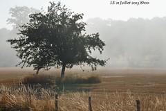 21 juillet 2015 8h00 (Letoines) Tags: champs campagne arbre nikon3200