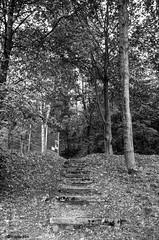 Stufen # L1002841 # Leica X2 - 2015 (irisisopen f/8 >3Mio) Tags: leica bw digital blackwhite x schwarzweiss farbe x2 irisisopen