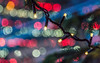 It's a Chrimbo Thing (DobingDesign) Tags: light bokeh christmaslights colours beauty droplets christmastree christmasspirit abstract redandgreen color streetphotography london londonstreets pattern tree alpine