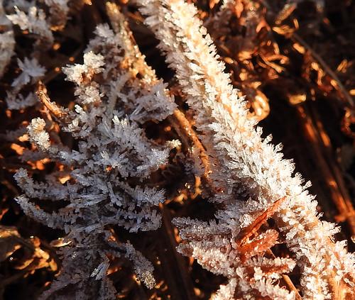 Frosty Bracken, Blaen Bran, Upper Cwmbran 29 December 2016