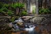 The Door (beaugraph) Tags: tasmania australia landscape mtparisdam ferns waterfall door lush