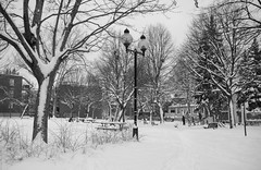 Covered With Snow (FreeManFreeWorld) Tags: park montral parc canada snow neige freemanfreeworld storm tempete calm blackandwhite noiretblanc nb bw montreal winter hiver