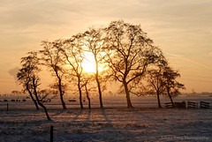 Sunset in the Winter II (Johan Konz) Tags: winter sunset orange sky rural trees outdoor landscape field serene atmosphere nikon d80 purmerend waterland netherlands tree sun fence snow silhouette sheep backlight