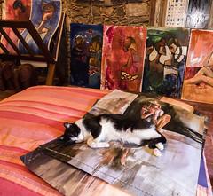 Siesta (Edgardo W. Olivera) Tags: panasonic lumix gh3 edgardoolivera microfourthirds microcuatrotercios uruguay coloniadelsacramento colonia galería arte picture cuadro gato cat sudamérica