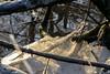 crackle (Nederland in foto's) Tags: nederlandinfotos nederland netherlands nikon paulvandevelde pdvandevelde padagudaloma dordrecht biesbosch outdoorphotography outdoor natuurfotografie nature naturephotographer ijs natuurijs vorst winter