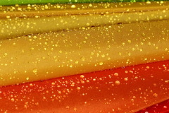 Rain drops (۞Thalib۞) Tags: raindrops rain umbrella saudiarabia dammam wetweather canon7dmii yn14exc macroringlite colours canon100mmf28lis