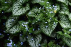 Die blumigen Tal [ Explored ] (Elf-8) Tags: flower spring joy solace