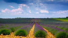 Lavender fields (Haut Var) (Eric Goncalves) Tags: france nature landscape fuji x fujifilm provence var xseries xt1 fujifilmx fujifilmfujinonxf1855mmf284rlmois fujifilmxt1
