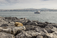 Dog resting (memfisnet) Tags: travel sea dog canon turkey boat ngc istanbul cobblestone promenade bosphorus 600d
