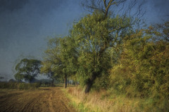 The English Countryside (Osgoldcross Photography) Tags: autumn trees sky sunlight art field grass photoshop painting landscape log nikon raw branch moody arty fineart stormy foliage trunk grasses filters turner hdr bough ploughed tonemapped paintingfromphotograph handheldhdr nikond5100 topazimpression