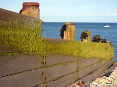 Breakwater (samm.doyle) Tags: wood sea seaweed west beach water sussex shingle pebbles groyne selsey breakwater