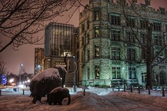 Mammoths in their cold element (beyondhue) Tags: mammoth sculpture public museum nature ottawa night winter snow cold beyondhue family tusk baby mcleod street metcalfe ontario canada atrium dark sky