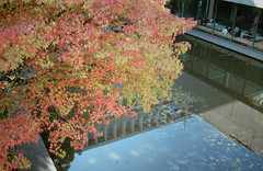 Robert C Brown Pool (jvde) Tags: 3570mmf3345nikkor burnaby coolscan film fujicolor nikon nikonfe sfu gimp