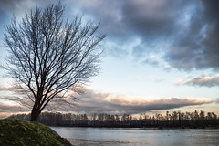 Tree by the Shore (rowjimmy76) Tags: portland johnslanding oregon pnw pacificnorthwest willametteriver hiking nature outdoors water sky pdx sigma18250mmf3563dcmacrooshsm canon sl1 landscape winter december