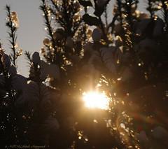 Winter (Natali Antonovich) Tags: winter tervuren snow frost christmasholidays christmas nature belgium belgique belgie ice sun light