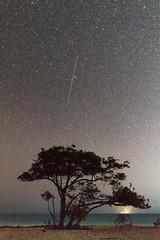 El árbol de los deseos. (MigueelRoojas) Tags: arbol tree wish deseos estrella fugaz meteoro islablanca islamujeres mexico nature