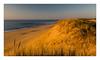 Dans les dunes #2 (philturp) Tags: dune sand olonnesurmer polarizingfilter sea sable trépied lessablesdolonne paysdelaloire vendée filtrepolarisant france mer fr paysage landscape