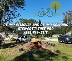 Stump Removal Stump Grinding Volusia County Florida (Zacs123) Tags: newsymrna stumpgrinding stumpremoval treeservices treetrimmingandremovalinvolusiacountyflorida volusia volusiacounty palmcoast ponceinlet portorange daytona daytonabeach debary deland