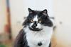 Baya (Roxo15) Tags: 2016 50mmf14 baya bokeh d7100 lieux nikon stmamet vsco animaux cat chat flikr