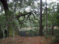 Dorothy B. Kearns Park (BunnyHugger) Tags: charleston dorothybkearnspark letterboxing southcarolina wandoriver