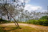DSC_1283 (Irina Lampe) Tags: qld queensland australia noosa noosashorenoosariver