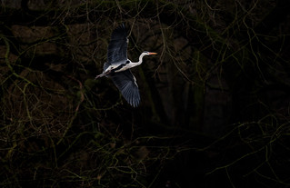 'Early Bird'