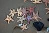 20170115-IMG_2341 (SGEOS@EARTH) Tags: beach storm starfish sea sand color beachhouse schelpen zeester aangespoeld strand holland sgeosearth canon