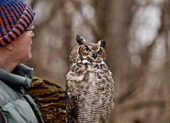 Great Horned Owl - Bubo virginianus - Stillman Nature Center - South Barrington IL (Meridith112) Tags: owl greathornedowl cookcounty midwest il illinois bird birding nikon nikond610 nikon80400 february 2017 winter wscf westsuburbanchicagoflickrers westernsuburbanchicagoflickr flickrgroupmeetup flickrmeetup bubovirginianus stillmannaturecenter barrington southbarrington pennyroad injured
