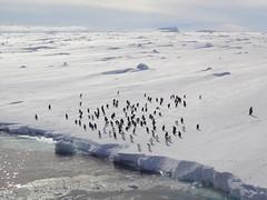 Manchots Adlie en Terre Adlie (Terres australes et antarctiques franaises) Tags: iceberg glace astrolabe navire adlie taaf antarctique logistique manchots dumontdurville manchotempereur terreadlie manchotadelie terresaustralesetantarctiquesfranaises