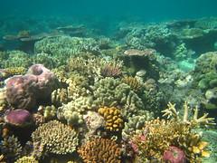 Opal reef, Great barrier reef (chabalmathias) Tags: trip holiday australia pacificocean tropical vacance australie oceania dryseason oceanie oceanpacifique tropicalnorth saisonseche
