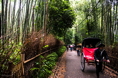 DSC_6894 (Yasushi Kisaki) Tags: trip light shadow japan landscape nikon kyoto bamboo