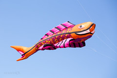 Great fish-like kite in the blue sky (straannick) Tags: park blue summer vacation sky sunlight holiday fish kite game color beautiful up sport canon fun outdoors happy freedom fly flying spring high funny holidays colorful pretty day child play bright wind outdoor moscow air joy flight happiness windy sunny bluesky kites enjoy romantic leisure copyspace amusing activity fullframe soaring pleasure lightness surprising tsaritsyno flypast pilotage canon6d
